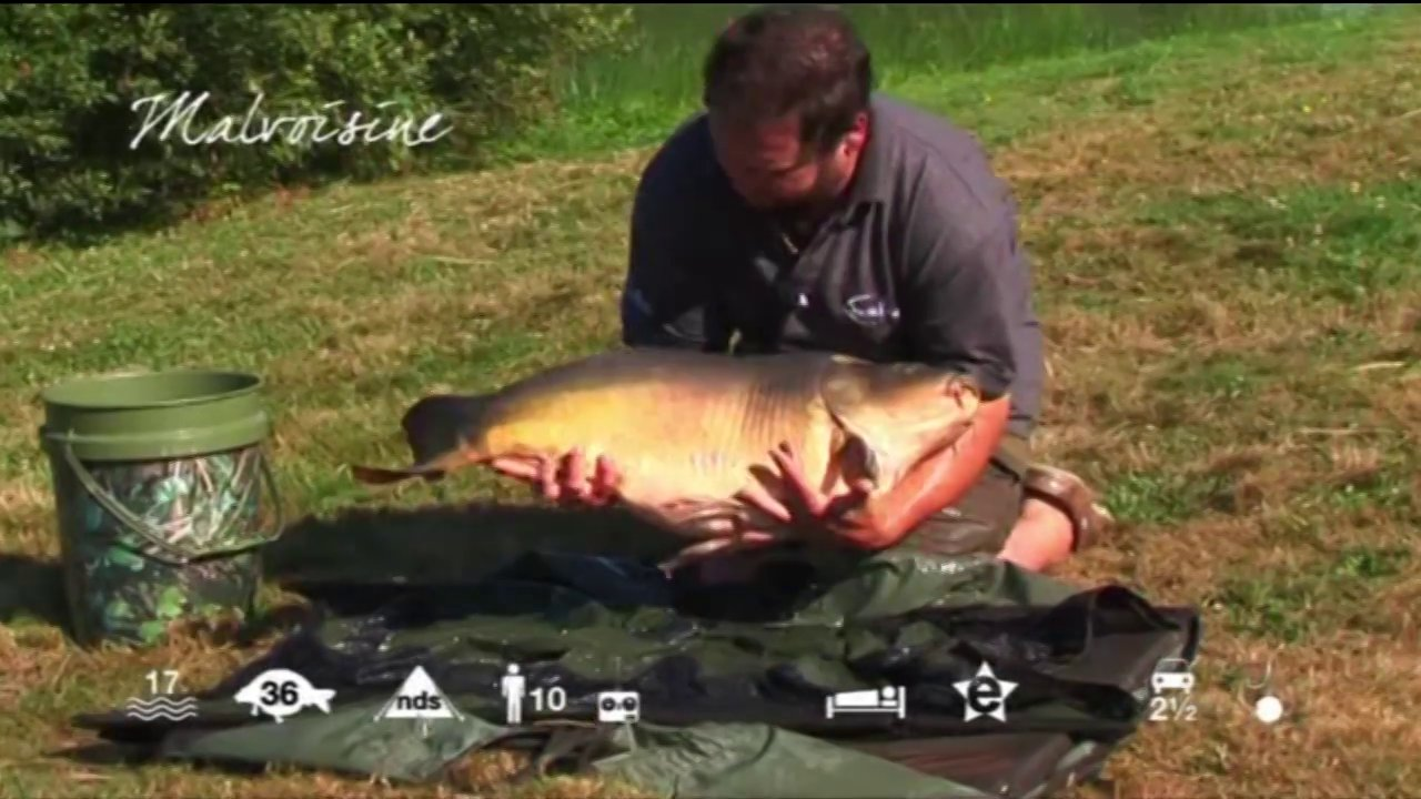 Malvoisine - carp fishing in France