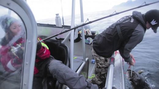 Fantastic Halibut Fishing in the Lofoten Islands, Northern Norway
