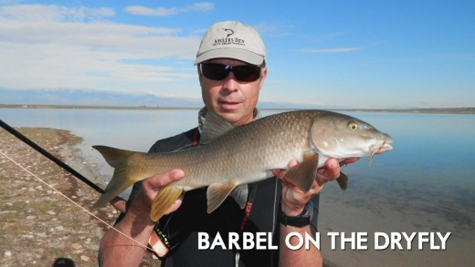Barbel on the Dry Fly in Spain - The Ultimate Fly Fishing Experience