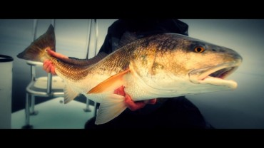Great Redfish action in North Florida